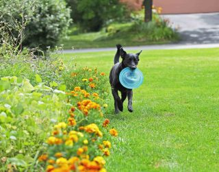 Spring pet safety is coming up roses