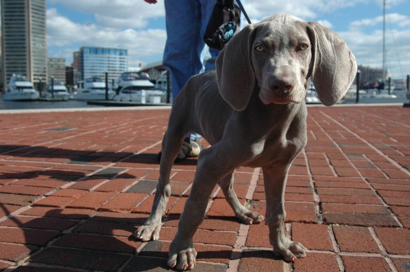 A Fun Guide To Choosing The Right Dog Breed